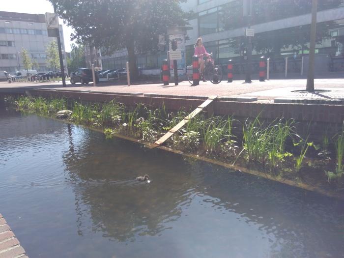 Eendjes Sint Jansbeek Arnhem