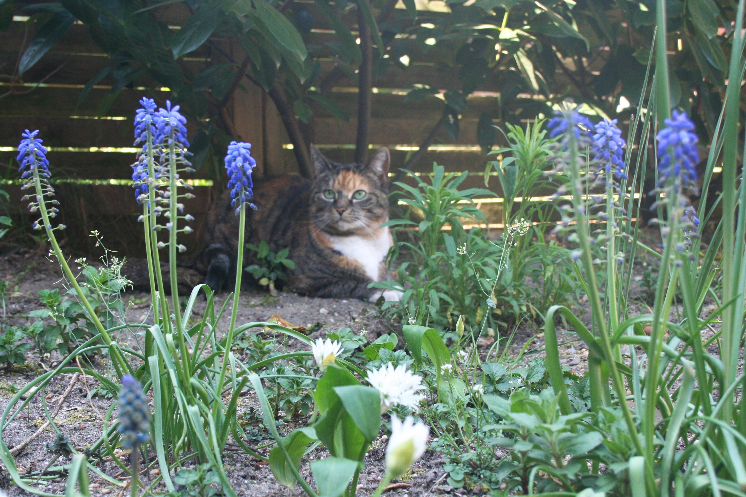 Japie in de tuin